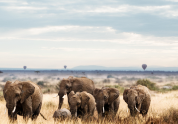 What are the Impacts of COVID-19 on Wildlife Conservation in Africa?